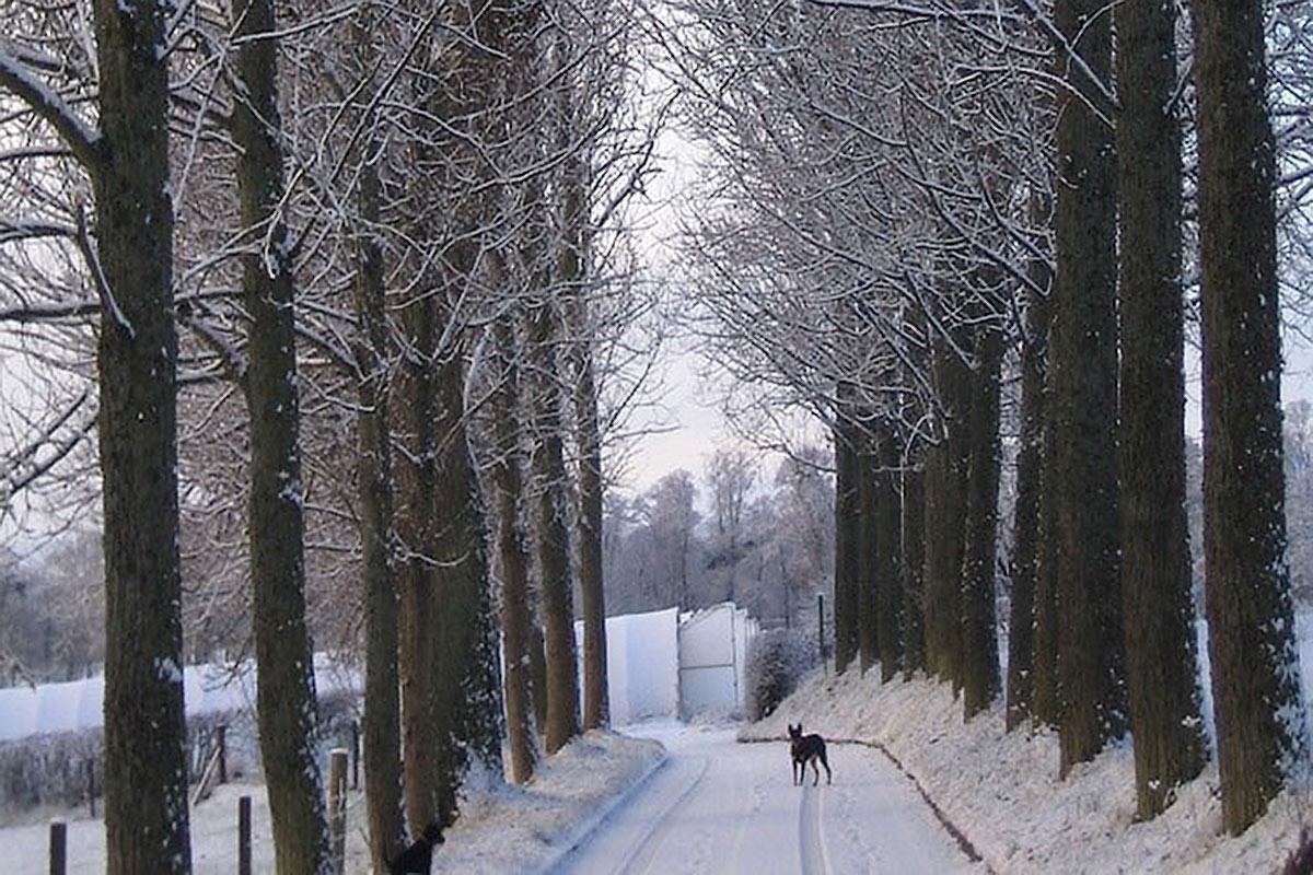 winter-drive